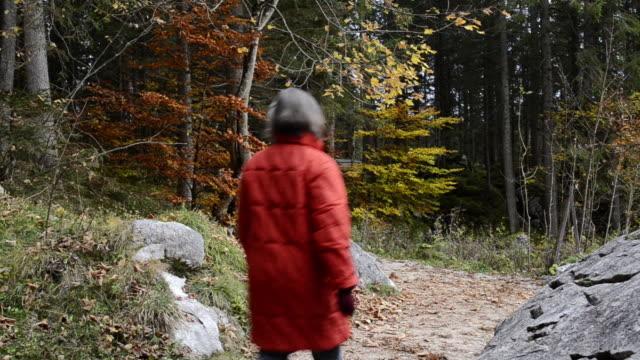 stockvideo's en b-roll-footage met ms woman walking through forest zauberwald / berchtesgaden, bavaria, germany - alleen één oudere vrouw