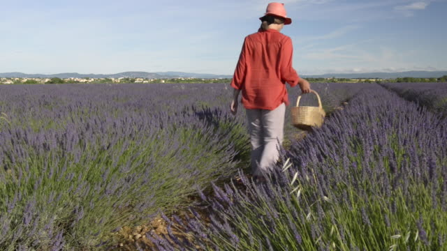 A woman walking through lavender in field