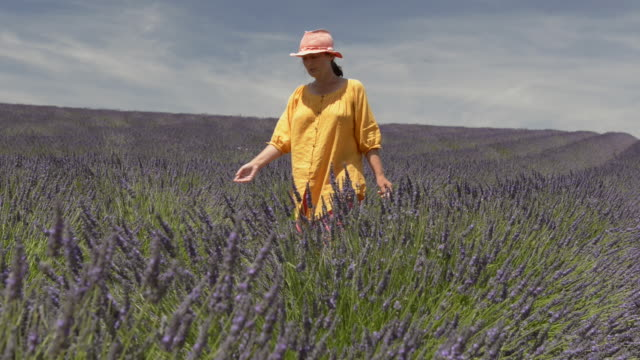 a woman walking through lavender in field - one mature woman only stock videos & royalty-free footage