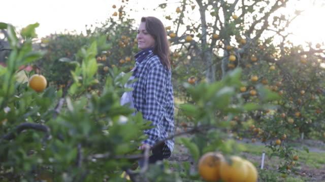 Woman walking through orange orchard.