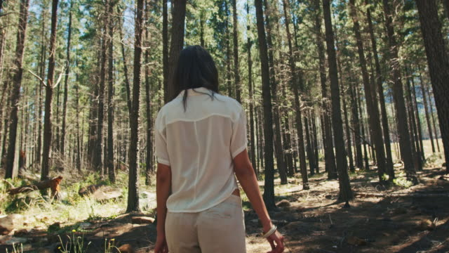 woman walking through the forest - sustainable lifestyle stock videos & royalty-free footage