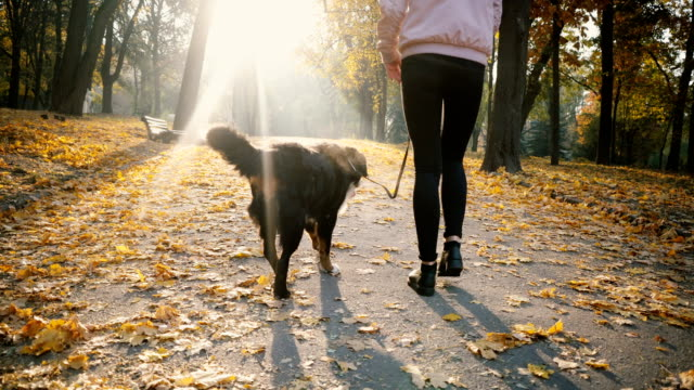 woman walking with dog in park in autumn - routine stock videos & royalty-free footage