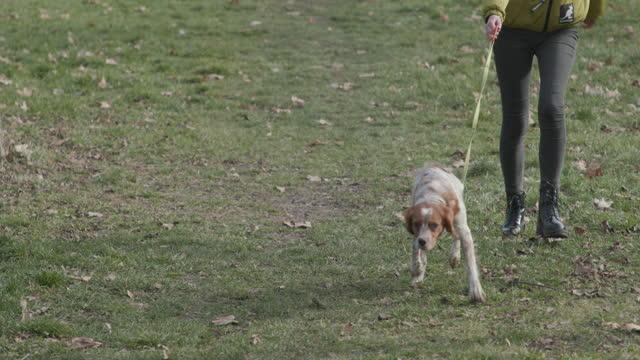 frau zu fuß mit ihrem ungeübten hund durch den park, während hund leine ziehen - haustierleine stock-videos und b-roll-filmmaterial
