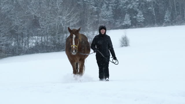 woman walking with horse in winter slow motion - winter coat stock videos & royalty-free footage