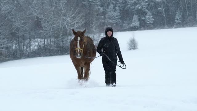 stockvideo's en b-roll-footage met woman walking with horse in winter slow motion - alleen één mid volwassen vrouw