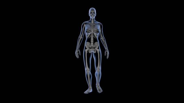 女性の歩行、x線体と骨格、ループ、薬用アニメーション用。 - 骨盤点の映像素材/bロール