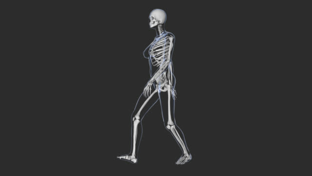 woman walking, x-ray body, skeleton, loop, for medicinal animation. - tibia stock videos & royalty-free footage