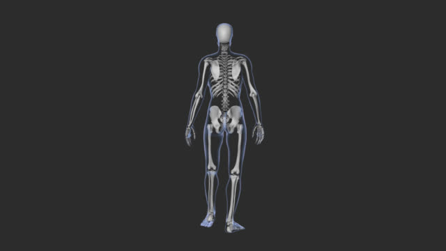 woman walking, x-ray body, skeleton, loop,rear view, for medicinal animation. - tibia stock videos & royalty-free footage