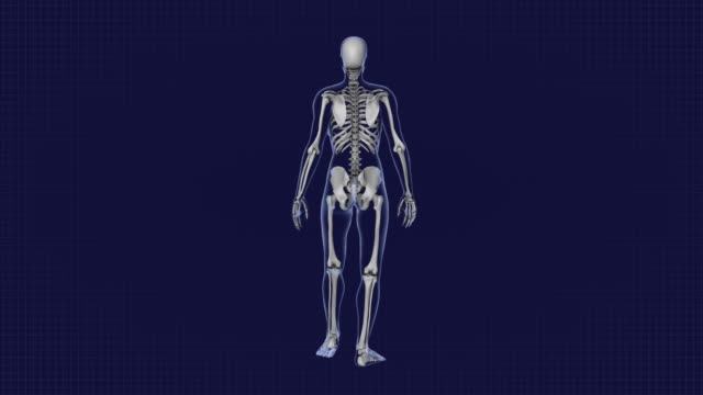 frau zu fuß, röntgenkörper, skelett, schleife, rückansicht, für medizinische animation. - knochen im beckenbereich stock-videos und b-roll-filmmaterial