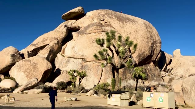 a woman walks at joshua tree national park on january 4 2019 in joshua tree national park california campgrounds and some roads have been closed at... - nationalpark joshua tree stock-videos und b-roll-filmmaterial