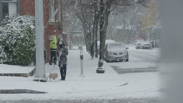 woman walks her dog on a snowy street during winter storm gail on december 16, 2020 in baltimore, md. winter storm gail brings snow and ice to the... - one young woman only stock videos & royalty-free footage
