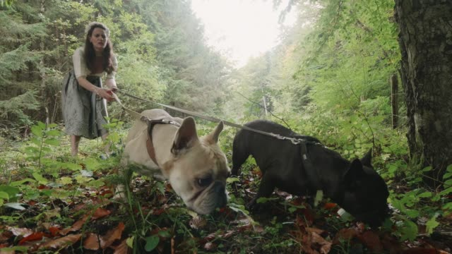 vídeos de stock, filmes e b-roll de a woman walks her dogs in nature wearing traditional german clothing - pet clothing