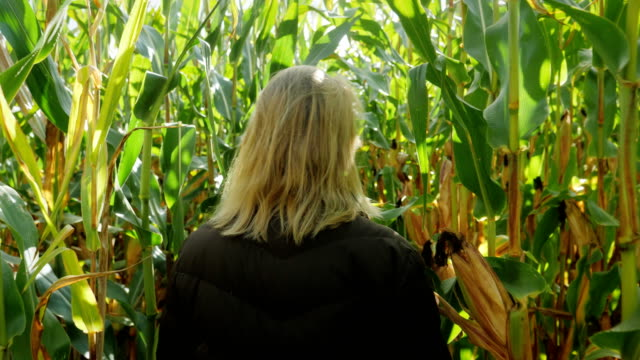 Woman walks in corn slow motion