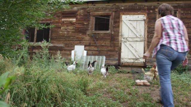 a woman walks into a chicken coop - chicken coop stock videos & royalty-free footage