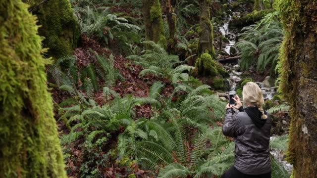 woman walks into mossy forest, creek trickles below - photographing stock videos & royalty-free footage