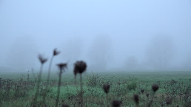 woman walks through an early morning misty meadow on walthamstow marshes on december 07, 2020 in london, england. parts of the south of the country... - meadow stock videos & royalty-free footage