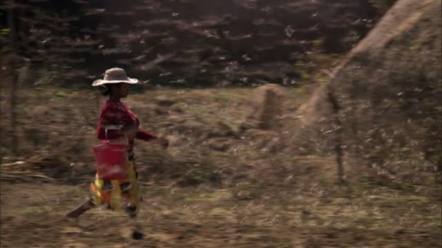 woman walks through swarm of locusts (locusta migratoria) on farmland, madagascar - only mid adult women stock videos & royalty-free footage