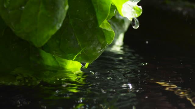 woman washes leaves under running water, japan. - takashima shiga stock videos & royalty-free footage