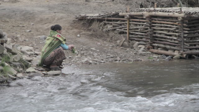 ws woman washing vegetables in river / xam neua, laos - one mid adult woman only stock videos & royalty-free footage