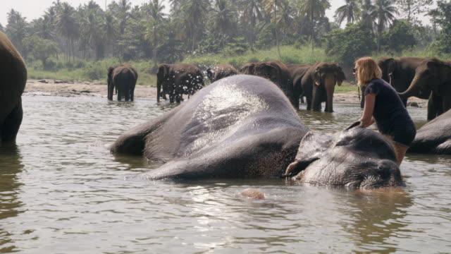 vídeos y material grabado en eventos de stock de ms woman lavado, elefante chapoteando en el agua, sri lanka - encontrar