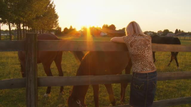 vídeos y material grabado en eventos de stock de hd: mujer mirando sus caballos en paddock - grupo pequeño de animales