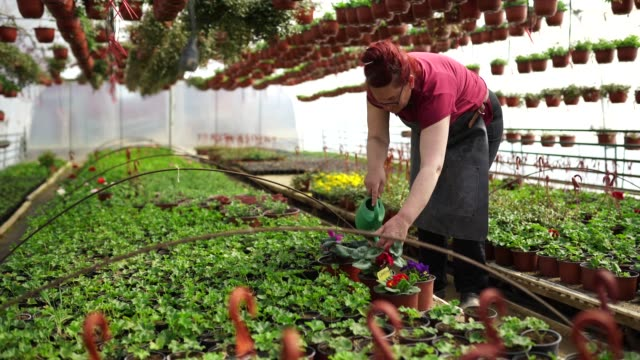 Woman watering flowers in a greenhouse