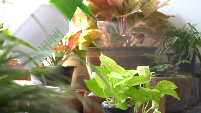 woman watering flowers inside home - houseplant stock videos and b-roll footage