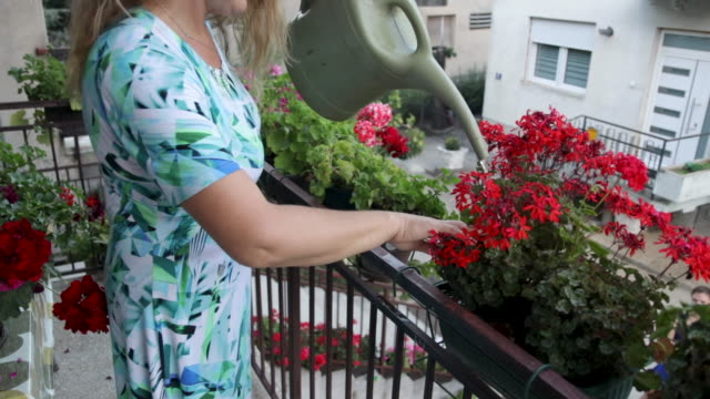 woman watering flowers on balcony - blossom stock videos & royalty-free footage