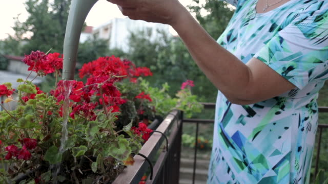 woman watering flowers on balcony - balcony stock videos & royalty-free footage