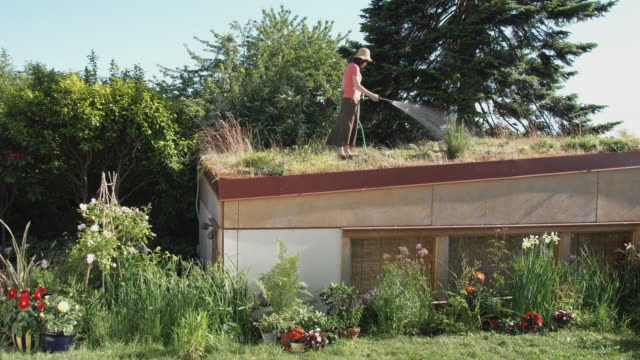 ws woman watering grass and plants on green roof / seattle, washington, usa - environmental conservation stock videos & royalty-free footage