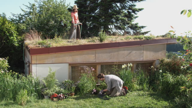 vídeos y material grabado en eventos de stock de ws woman watering grass and plants on green roof while man plants flowers in garden below / seattle, washington, usa - jardín