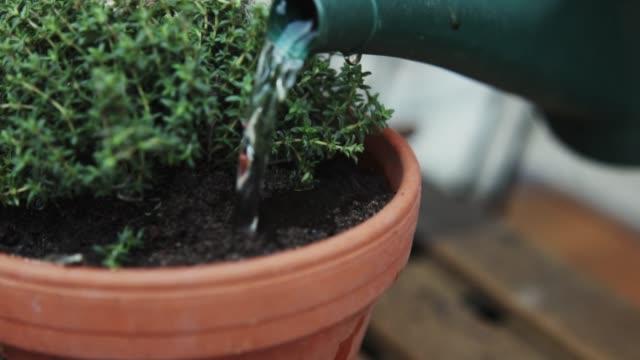 woman watering herbage. - sowing stock videos & royalty-free footage