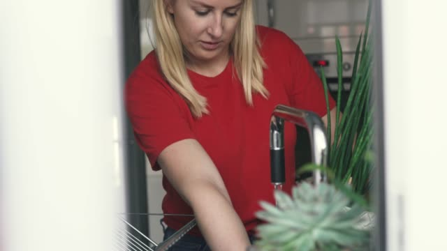 woman watering houseplants - houseplant stock videos and b-roll footage