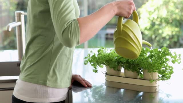 vidéos et rushes de woman watering indoor herb plants - plante