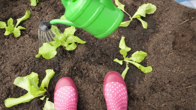 woman watering lettuce seedling - watering can stock videos & royalty-free footage