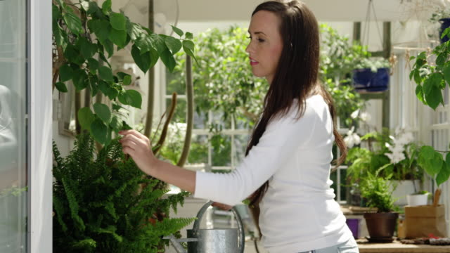 woman watering plants in a greenhouse, panning shot - pot plant stock videos and b-roll footage
