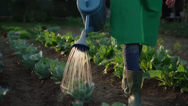 woman watering plants in a vegetable garden - organic stock videos & royalty-free footage