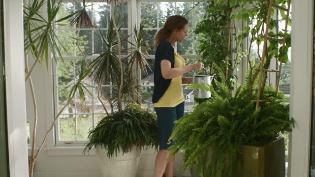 vídeos y material grabado en eventos de stock de ms woman watering plants in garden room / edmonds, washington, usa - regar