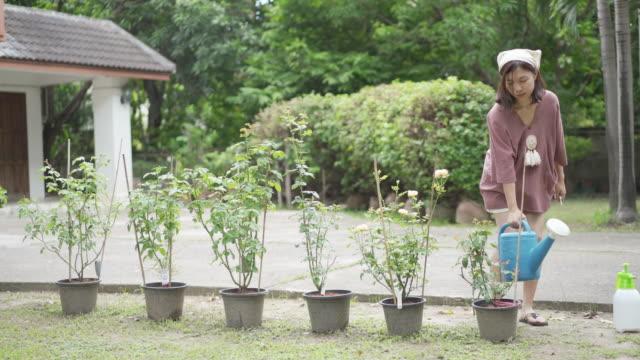 ws frau wässert rosen im vorgarten - haarschmuck stock-videos und b-roll-filmmaterial