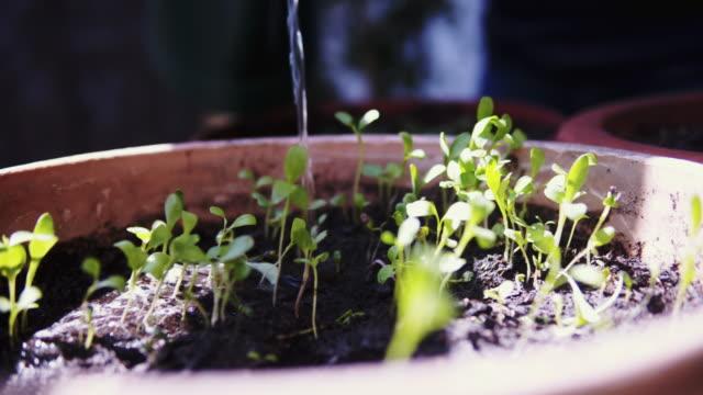 woman watering seedlings in flower pot. - seedling stock videos & royalty-free footage