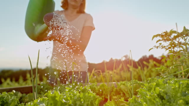 slo mo woman watering the garden - gardening stock videos & royalty-free footage