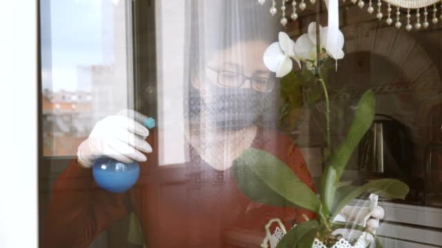 vídeos de stock e filmes b-roll de woman watering the plant with spray at quarantine period - peitoril de janela
