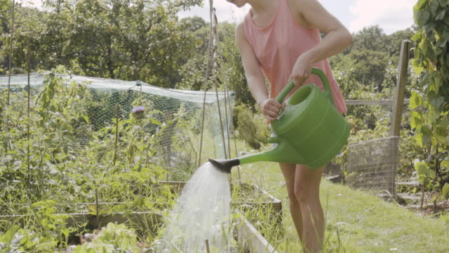 woman watering vegetable plot in allotment. - watering can stock videos & royalty-free footage