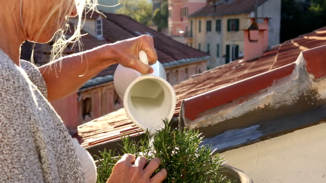 woman waters plant on medieval rooftop terrace - giardinaggio video stock e b–roll