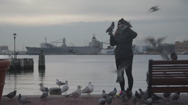 woman wearing a mask feeds birds at the inner harbor during the coronavirus pandemic on january 8, 2021 in baltimore, maryland. the united states set... - focus on foreground stock videos & royalty-free footage