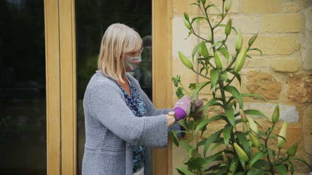 woman wearing face mask trimming green plants outside the home - cut video transition stock videos & royalty-free footage