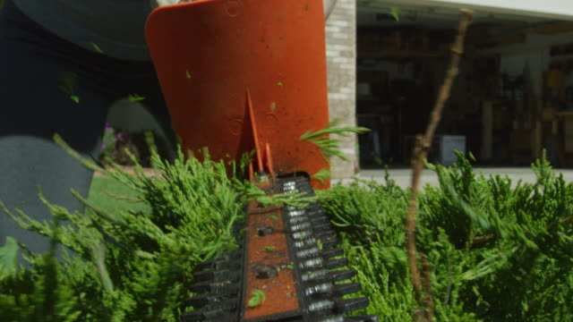 a woman wearing gardening gloves uses an electric hedge trimmer to prune a juniper bush outside a house on a sunny day - order stock videos & royalty-free footage