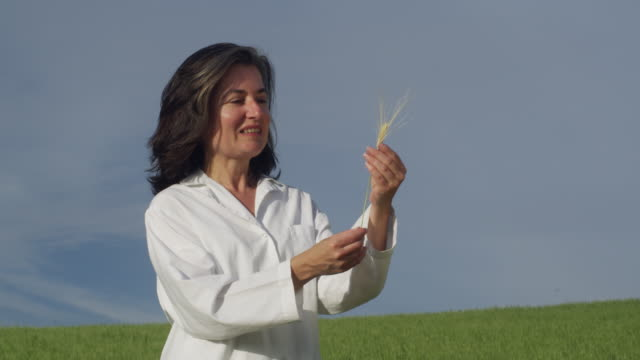 ms woman wearing lab coat standing in green field, holding up and checking ripe ear of wheat / andalusia, malaga, spain - laborkittel stock-videos und b-roll-filmmaterial