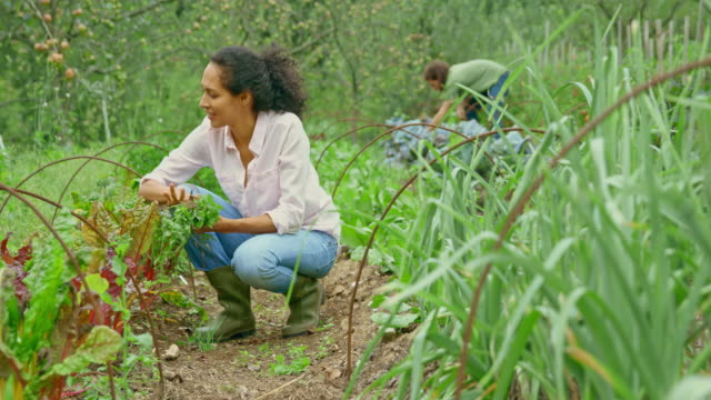 woman weeding in her permaculture garden by hand - weeding stock videos & royalty-free footage
