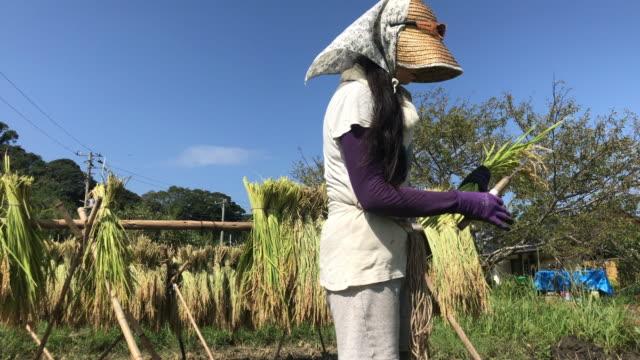 a woman who works hard to harvest - 農作業点の映像素材/bロール